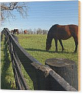 Thoroughbred Horses In Kentucky Pasture Wood Print