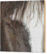 Thoroughbred Portrait One Wood Print