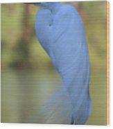 Thoughtful Heron Wood Print