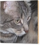 Thoughtful Holly The Cat Wood Print