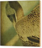 Thoughtful Pelican Wood Print