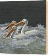 Three American Pelicans Wood Print