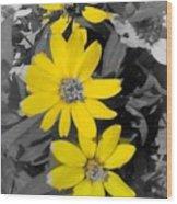 Three Amigos- Daisy art yellow flower Wood Print