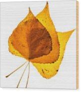Three Backlit Cottonwood Leaves In Autumn On White Wood Print