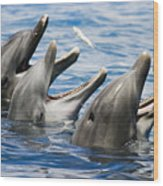 Three Bottlenose Dolphins Wood Print