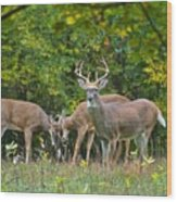 Three Bucks_0054_4463 Wood Print