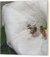 Three Busy Bees Wood Print
