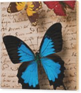 Three Butterflies Wood Print