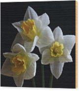 Three Daffodil Wood Print