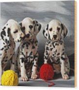 Three Dalmatian Puppies  Wood Print by Garry Gay