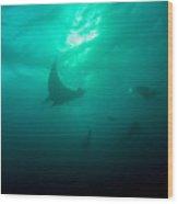 Three Divers And A Manta Wood Print