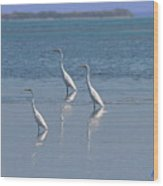 three Egrets Wood Print
