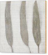 Three Eucalyptus Leaves Wood Print