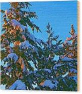 Three Evergreens Wood Print