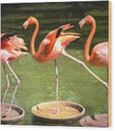 Three Flamingos Wood Print