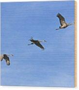 Three Flying Sandhill Cranes Wood Print