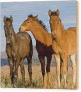 Three Foals Wood Print