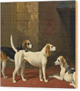 Three Fox Hounds In A Paved Kennel Yard Wood Print