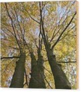 Three Friends Wood Print