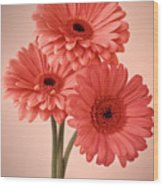 Three Gerberas 1 Wood Print