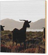 Three Goats Wood Print
