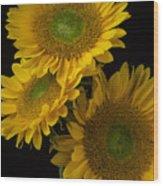 Three Golden Sunflowers Wood Print