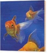 Three Goldfish Wood Print by Simon Sturge