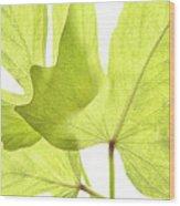 Three Green Leaves Wood Print