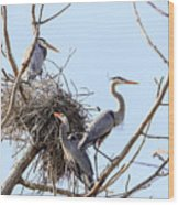 Three Herons Wood Print