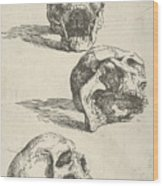 Three Human Skulls Wood Print