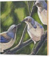 Three Jays Wood Print