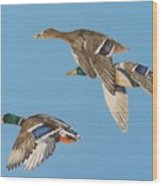 Three Mallards Wood Print