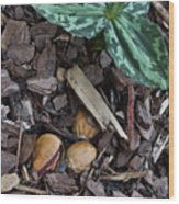 Three Nuts For A Trillium Wood Print