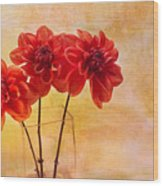 Three Orange Dahlias Wood Print by Rebecca Cozart