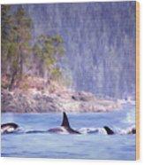 Three Orca Whales Wood Print