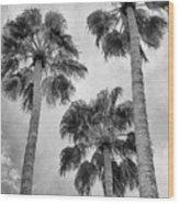 Three Palms Bw Palm Springs Wood Print