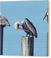 Three Pelicans Wood Print