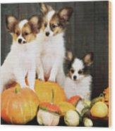 three puppy with pumpkin by Iuliia Malivanchuk Wood Print
