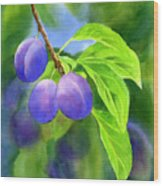 Three Purple Plums With Background Wood Print