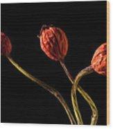 Three Rose Hips Wood Print