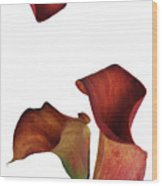 Three Rust Calla Lilies Wood Print