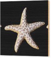 Three Stars - Sepia Wood Print by Zoe Ferrie