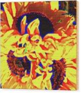 Three Sunflowers Wood Print