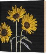 Three Sunflowers Light Painted On Black Wood Print