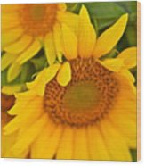 Three Sunflowers Wood Print