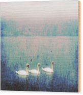 Three Swans Wood Print