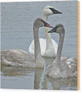 Three Swans Swimming Wood Print