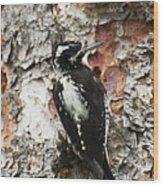 Three Toed Woodpecker  Wood Print