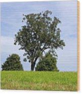 Three Tree Hill Wood Print