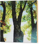 Three Tree Light Wood Print